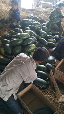 广西壮族自治区崇左市凭祥市黑美人西瓜 有籽 1茬 7成熟 5斤打底