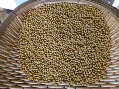 吉林省吉林市蛟河市合农61 生大豆 1等品