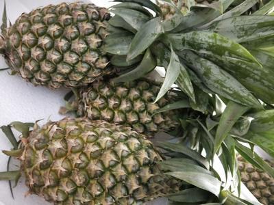 广西壮族自治区南宁市江南区香水菠萝 2 - 2.5斤