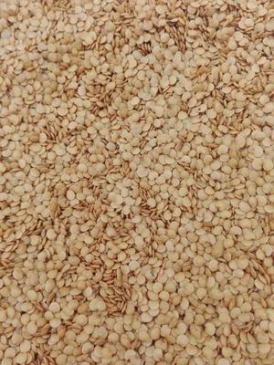 江苏省南通市海门市茄子种子 ≥95% 杂交种
