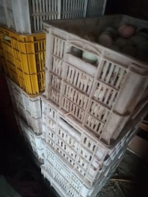 河南省周口市沈丘县青皮鸭蛋 食用 箱装