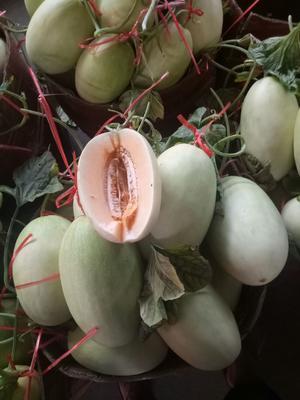 云南省普洱市思茅区天蜜脆梨甜瓜 1斤以上