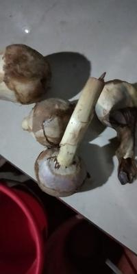 云南省红河哈尼族彝族自治州弥勒市白肉慈菇 30~50g