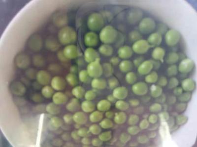 云南省文山壮族苗族自治州文山市水果豌豆 5-7cm 饱满
