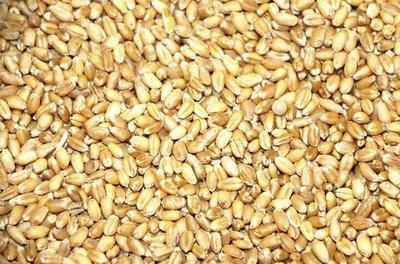 湖北省荆门市钟祥市混合小麦
