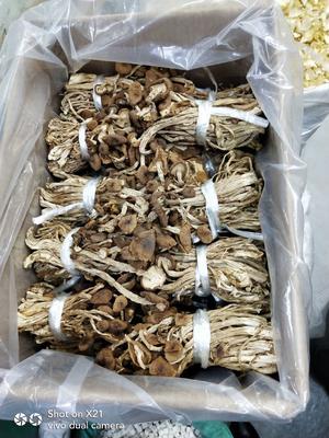 广东省广州市荔湾区广昌3号茶树菇 6~8cm 未开伞 干茶树菇
