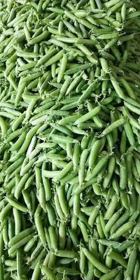 四川省攀枝花市仁和区甜脆豌豆 5-7cm 较饱满