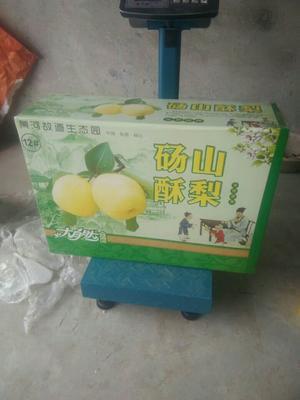 安徽省宿州市萧县大叶香菜 25~30cm