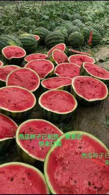 湖北省襄阳市宜城市甜王西瓜 有籽 1茬 8成熟 8斤打底