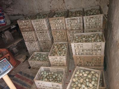 湖北省黄冈市麻城市土鸭蛋 食用 散装