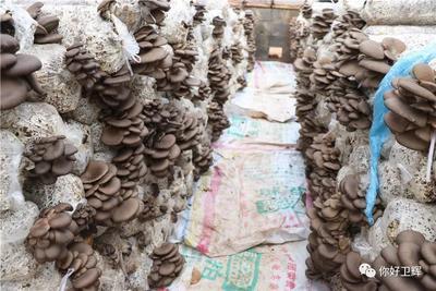 河南省新乡市卫辉市蘑菇