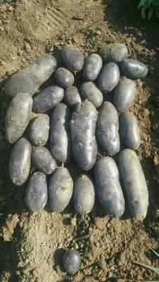 山东省枣庄市滕州市黑金刚土豆 2两以上