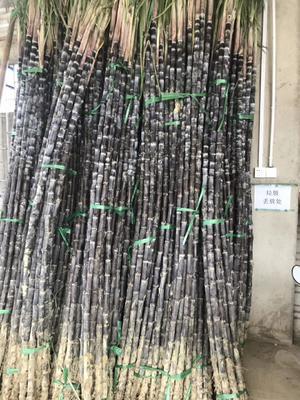 广西壮族自治区柳州市融安县黑皮甘蔗 1.5 - 2m 3 - 4cm