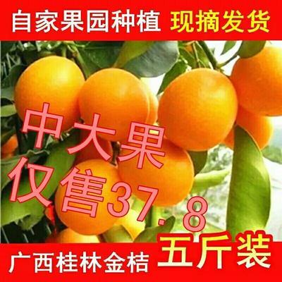 广西壮族自治区桂林市平乐县脆皮金桔 5-6cm 1两以下