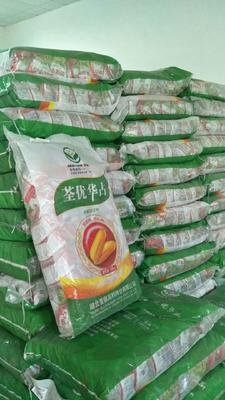 贵州省贵阳市花溪区水稻种子 ≥90% 杂交种