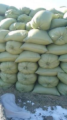 黑龙江省绥化市北林区黑水稻 中稻