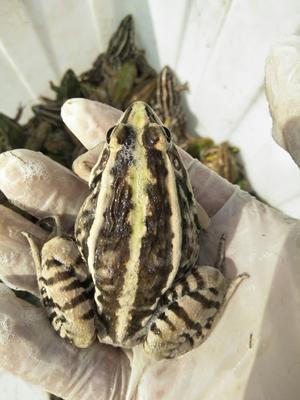 安徽省蚌埠市龙子湖区青蛙