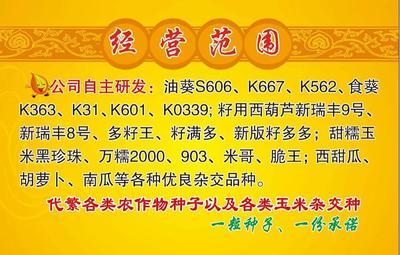 甘肃省酒泉市肃州区玉米种子 双交种 ≥96% ≥99% ≥95% ≤13%