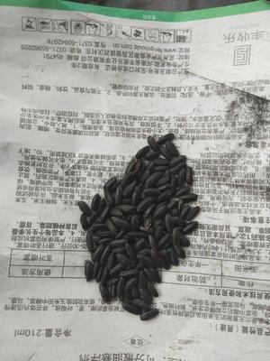 黑龙江省佳木斯市抚远县黑水稻 晚稻