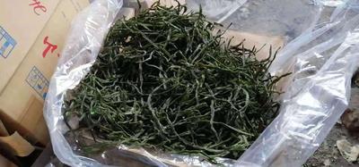 山东省枣庄市滕州市绿龙芸豆 10cm以上