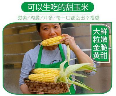 广东省广州市番禺区超甜二号 带壳 甜