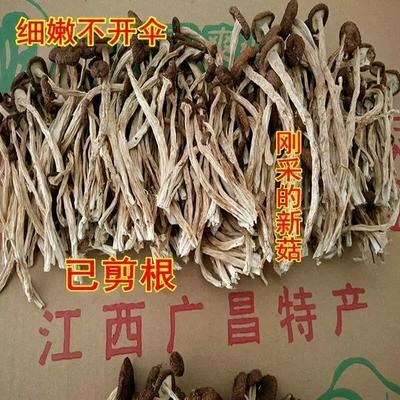 江西省抚州市广昌县棕褐色帽茶树菇 10~12cm 未开伞 干茶树菇