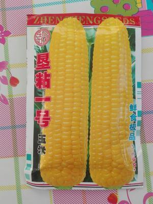 内蒙古自治区赤峰市元宝山区玉米种子  双交种 ≥95% ≥99% ≥90% ≤13%