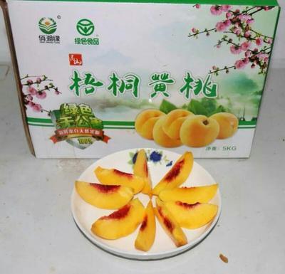 湖南省邵阳市邵东县锦绣黄桃 45mm以上 3 - 4两
