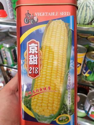 江苏省宿迁市沭阳县玉米种子 ≥90% ≥98% ≥99% 三交种 ≤5%