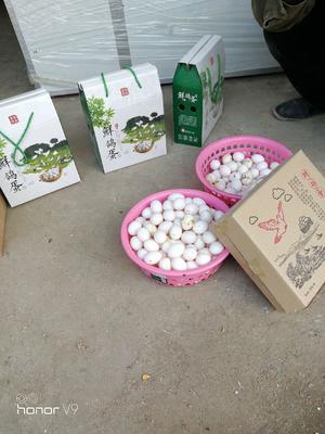 山东省菏泽市郓城县肉鸽蛋 孵化 箱装
