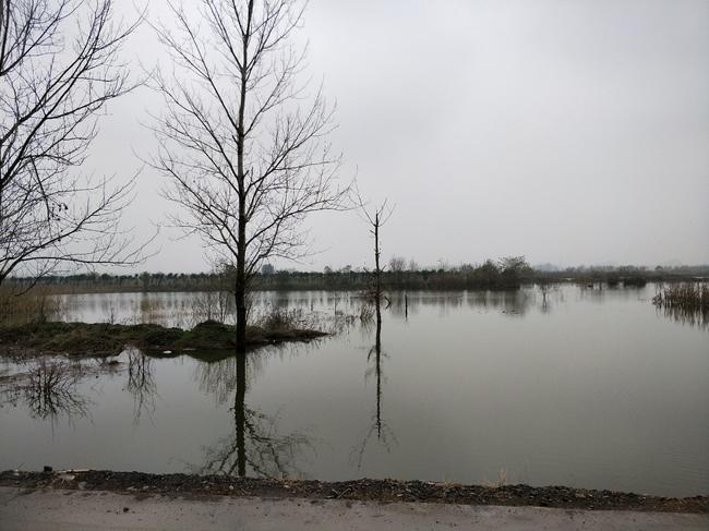 濉溪附近500亩低洼地出租,水电路通,适合浅水养殖,光伏发电等合