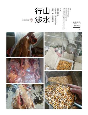 山东省菏泽市郓城县肉鸽肉 新鲜