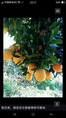 广西壮族自治区南宁市江南区赣南脐橙 65 - 70mm 4两以下