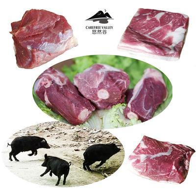 北京怀柔区藏香猪 100斤以上