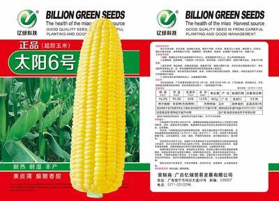 广西壮族自治区南宁市兴宁区玉米种子 单交种 ≥99% ≥99% ≥90% ≤13%