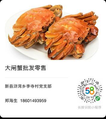 河南省信阳市新县长荡湖大闸蟹 3.0-3.5两 公蟹
