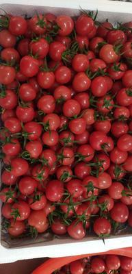 山东省潍坊市寿光市千禧西红柿 精品 硬粉 弧一以下