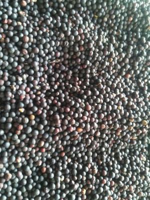 内蒙古自治区呼伦贝尔市海拉尔区油菜籽