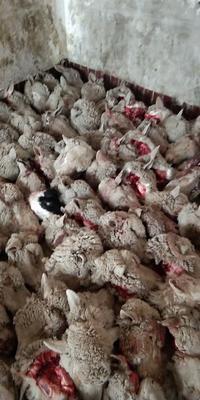 陕西省榆林市榆阳区羊头