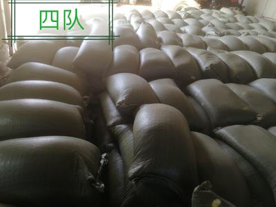 黑龙江省齐齐哈尔市拜泉县东北黑龙江大豆 生大豆 2等品