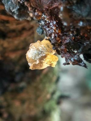 广西壮族自治区桂林市平乐县食用桃胶 6-12个月