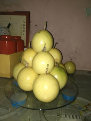 广西壮族自治区来宾市兴宾区黄金百香果 统货