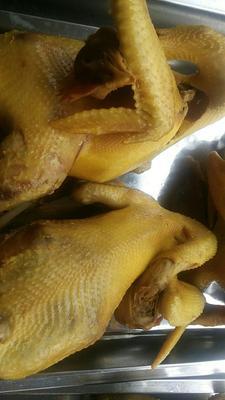 福建省厦门市同安区鸡肉类 简加工