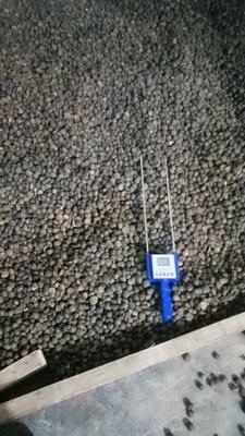 贵州省黔西南布依族苗族自治州望谟县油茶籽