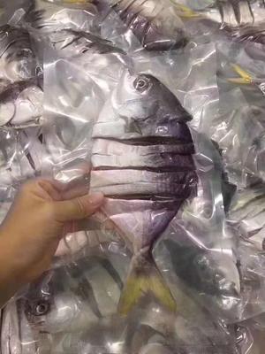 广东省清远市清新区金鲳鱼 野生 0.5公斤以下
