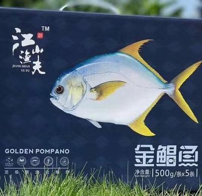 广西壮族自治区防城港市防城区金鲳鱼 人工养殖 1.5-2.5公斤
