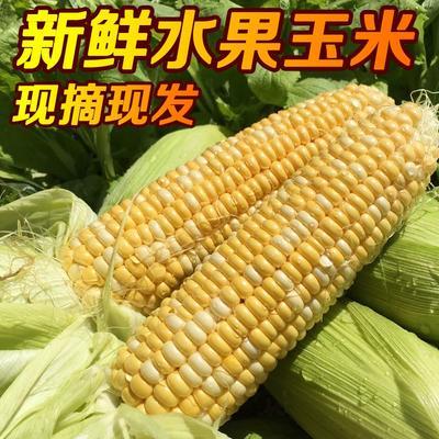 陕西省咸阳市淳化县甜玉米 甜 带壳