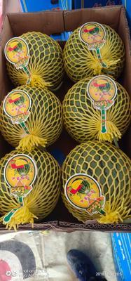 广东省汕尾市海丰县特小凤西瓜 有籽 1茬 9成熟 5斤打底