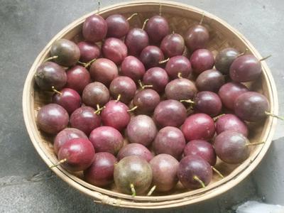 广西壮族自治区梧州市岑溪市紫红色百香果 80 - 90克