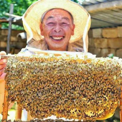 河南省洛阳市嵩县土蜂蜜 塑料瓶装 2年以上 100%